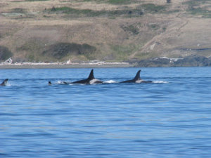 whaletales1