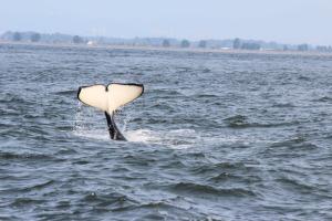 whaletales3