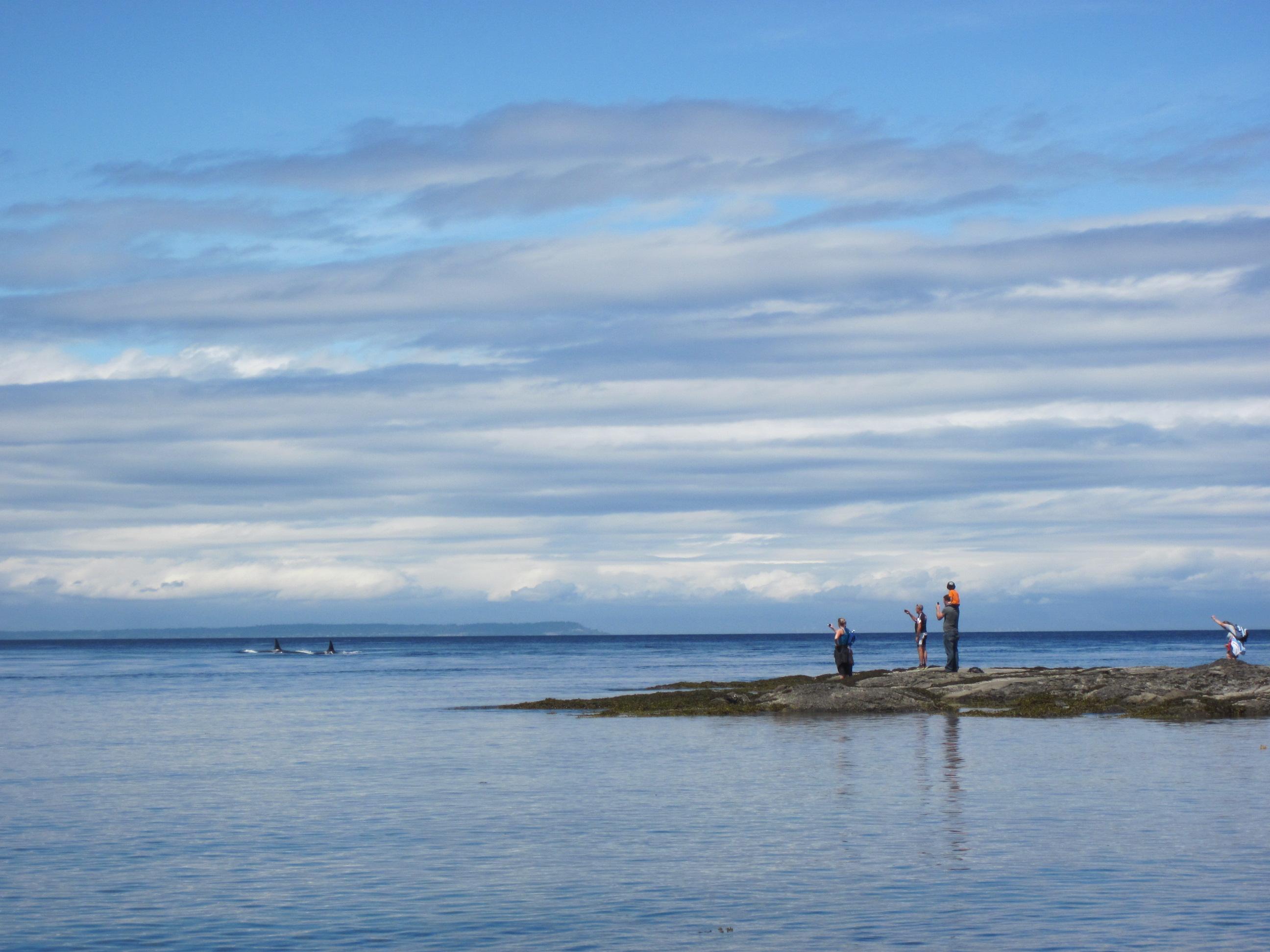 Saturna Island Killer Whales – 19/7/14