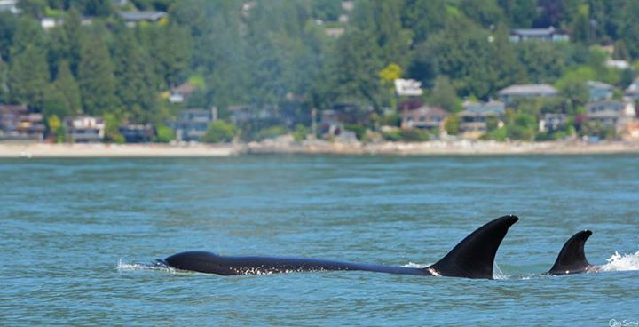 Transient's in Vancouver Harbour! – 22/6/15
