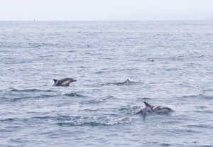 Dolphins-3w1