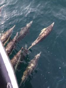 Dolphins-6w