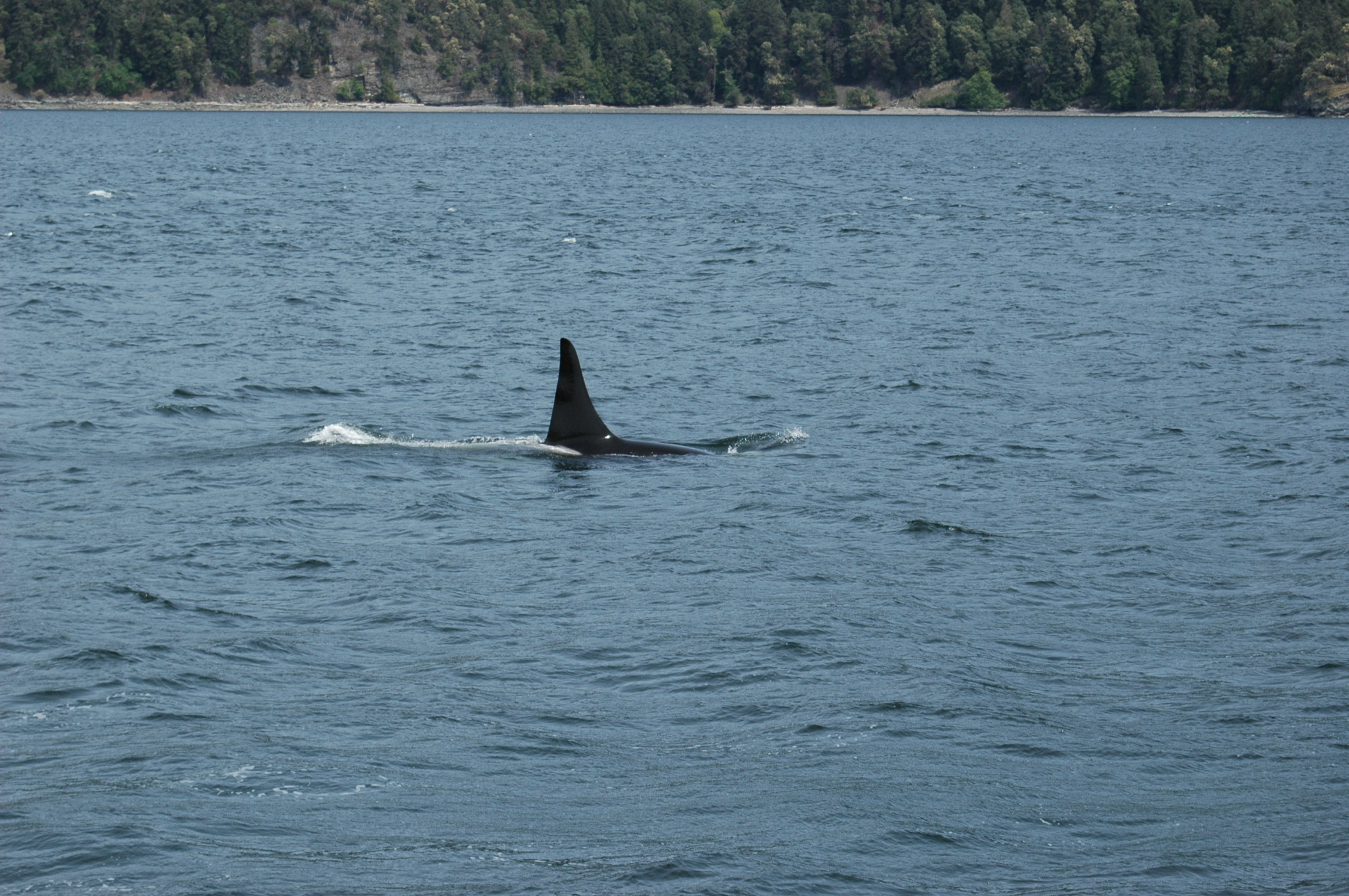 The First Time I Saw Killer Whales! – 28/4/16