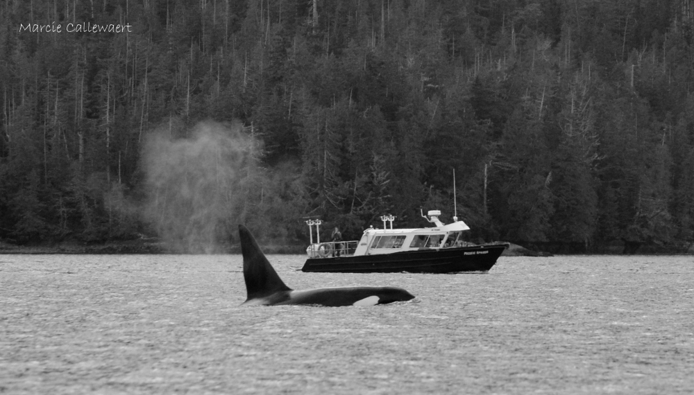 The T11's in Clayoquot Sound – 19/3/16