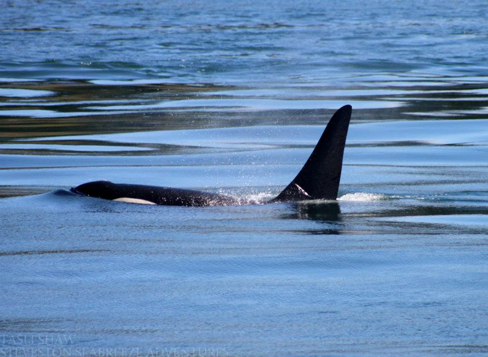 Incredible Day with J Pod – 24/6/12