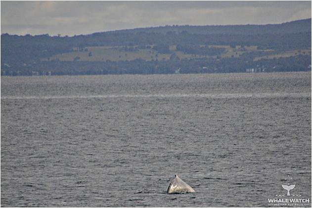 How About Those Dolphins – 17/9/16