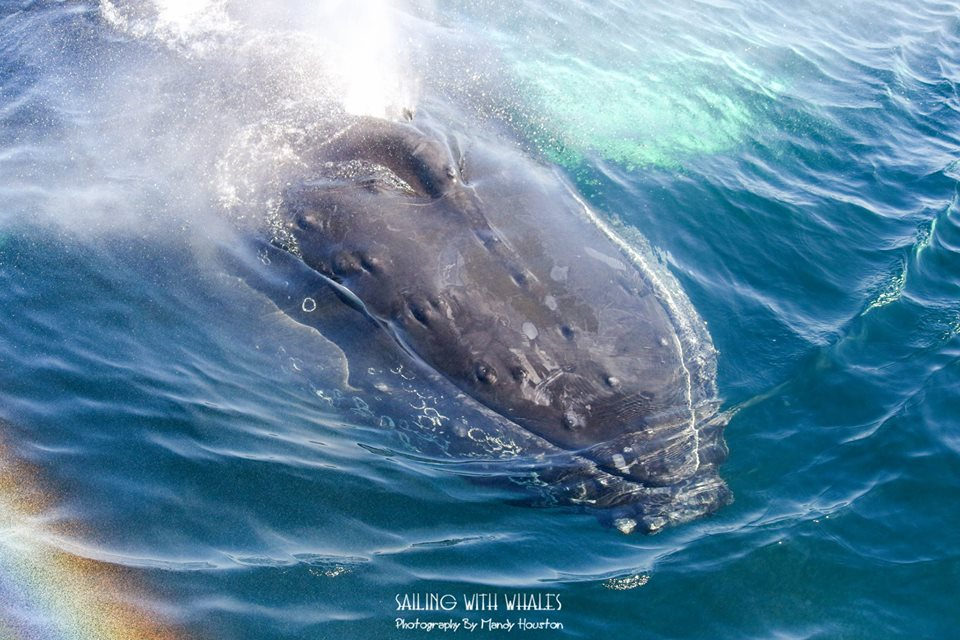 Another Awesome Humpback Trip! – 19/8/16