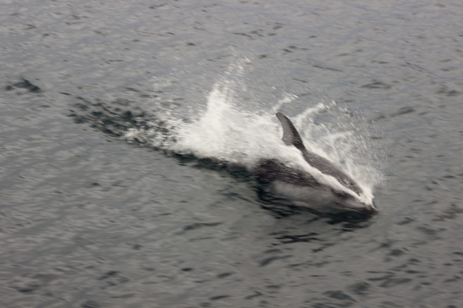 Tales of Saving Whales – Lisa G.