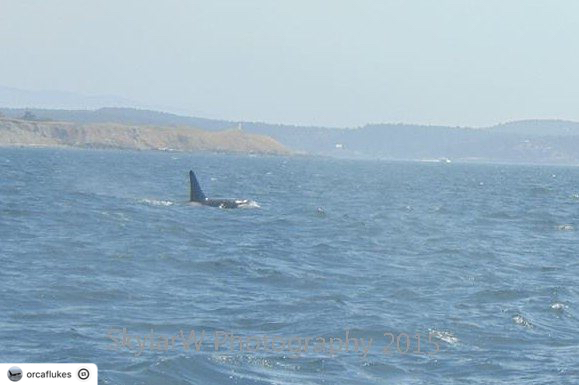 The First Time I Saw a Killer Whale! – 30/8/15