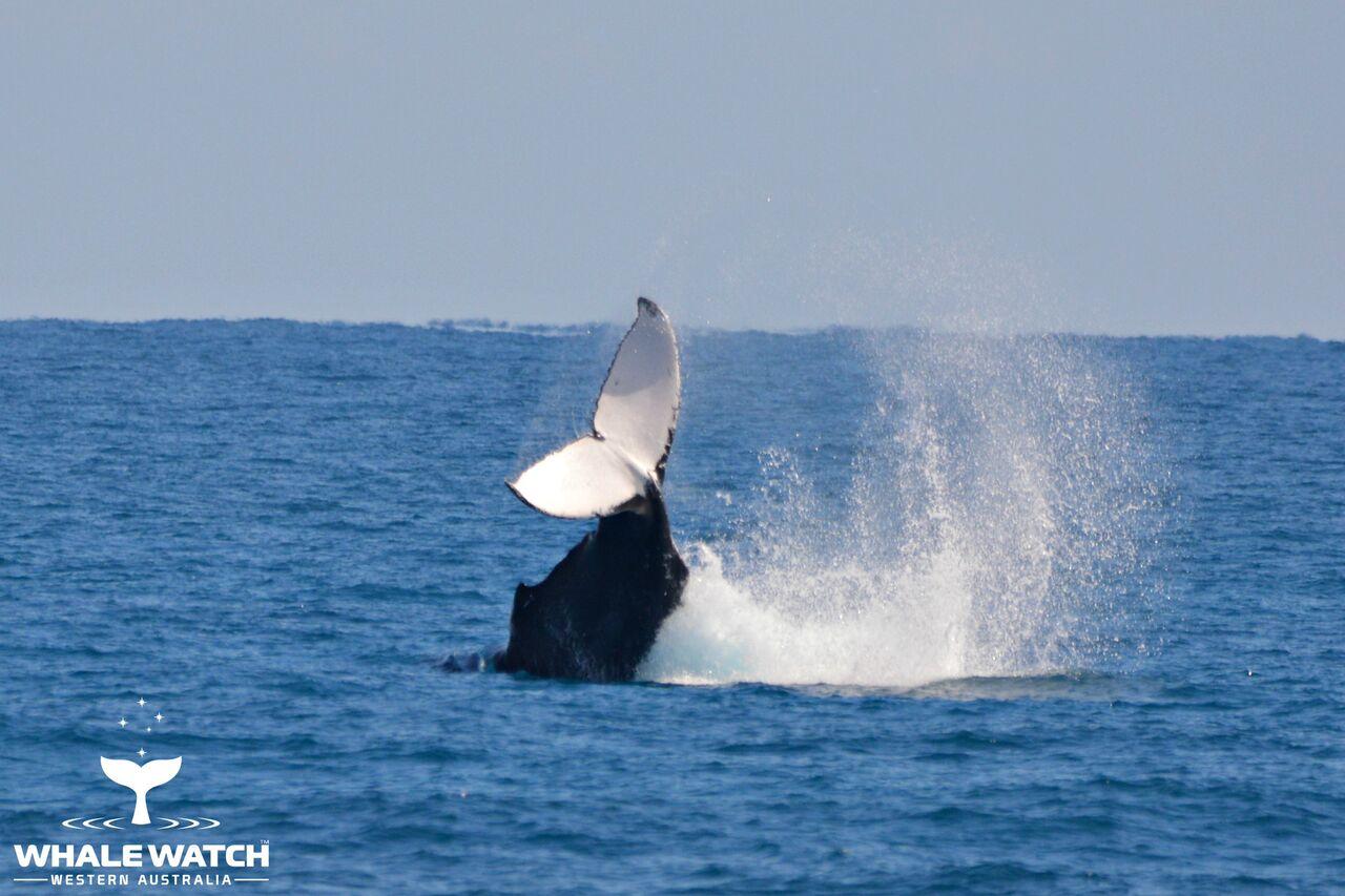 Hillarys Whale School – 18/11/17