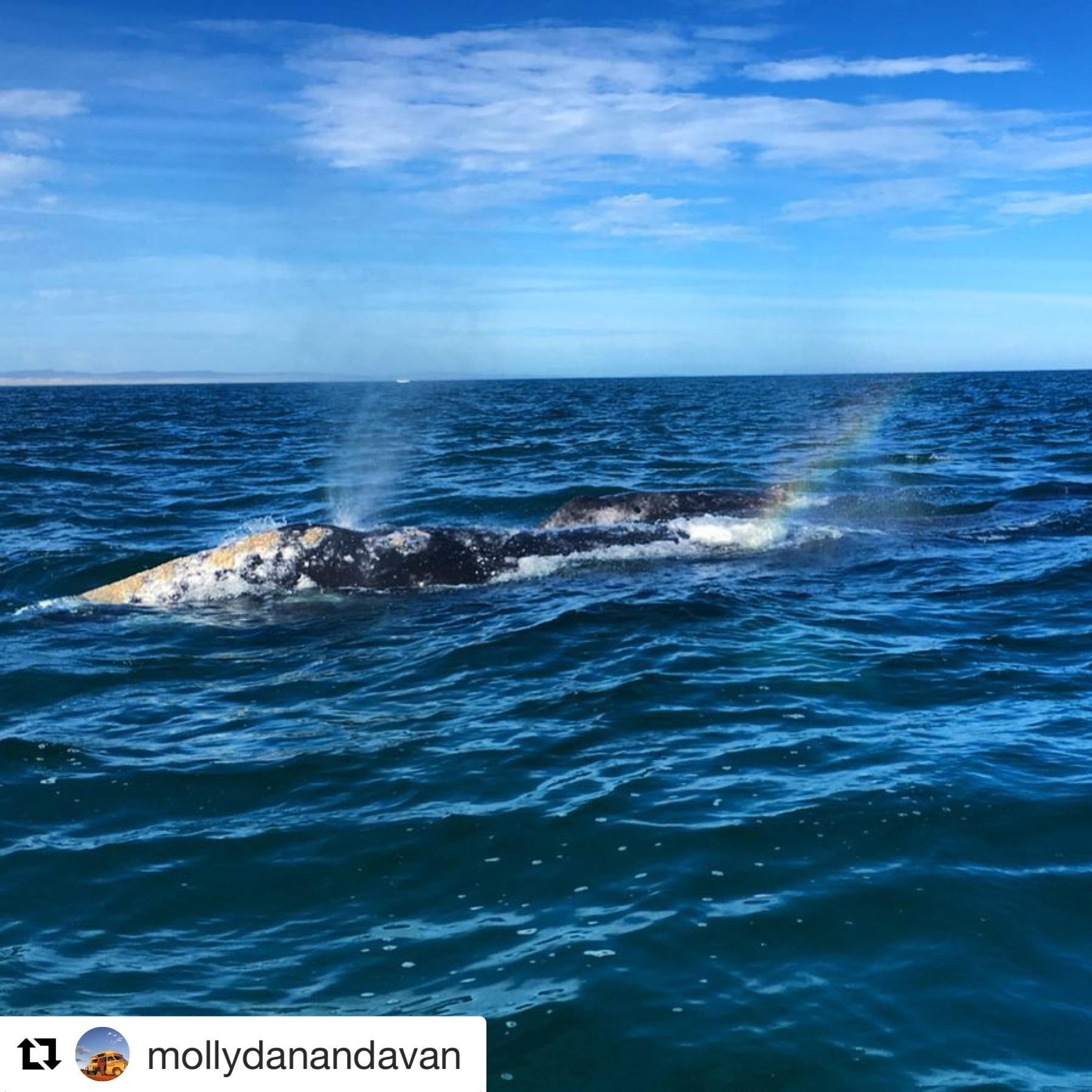 Grey Whales in Mexico! – 7/3/18