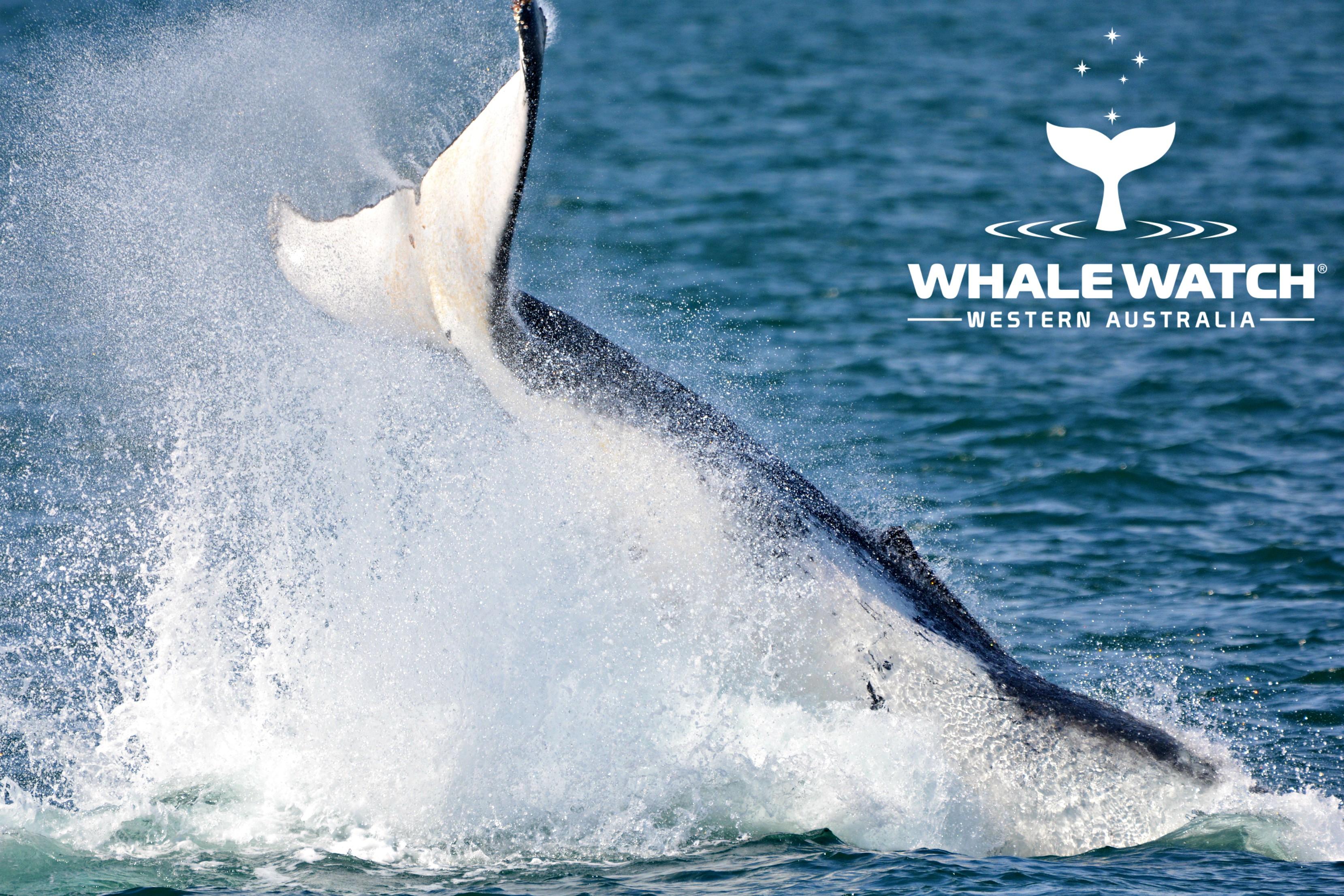 Sardine Jetty Whale Watching, Fremantle – 27/9/18