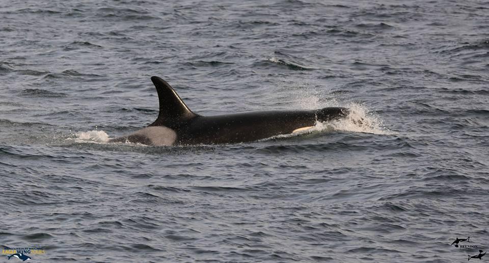 November Whales! – 16/11/17