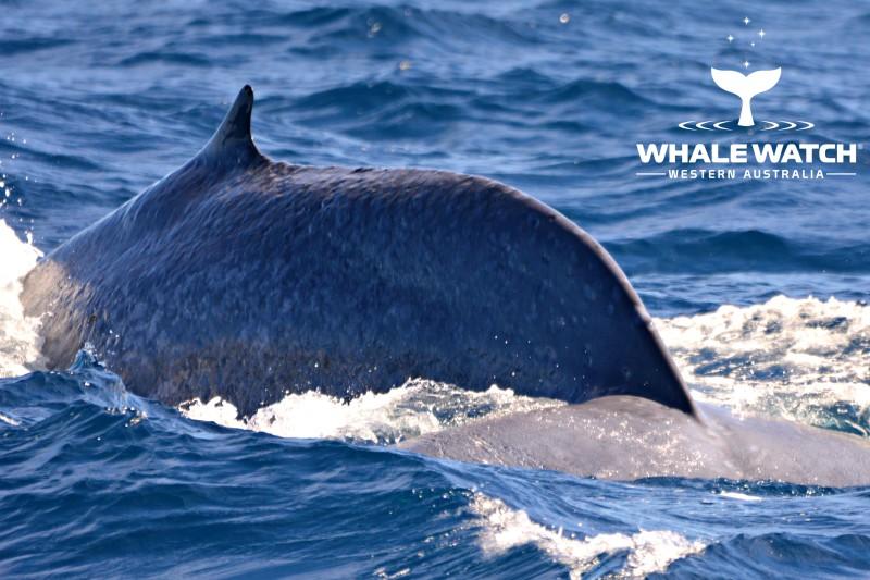 Blue Whale 2 – 30/3/19