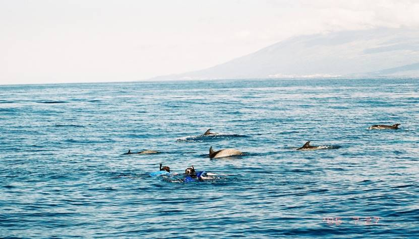 A Special Cetacean Day in The Azores – 15/7/03