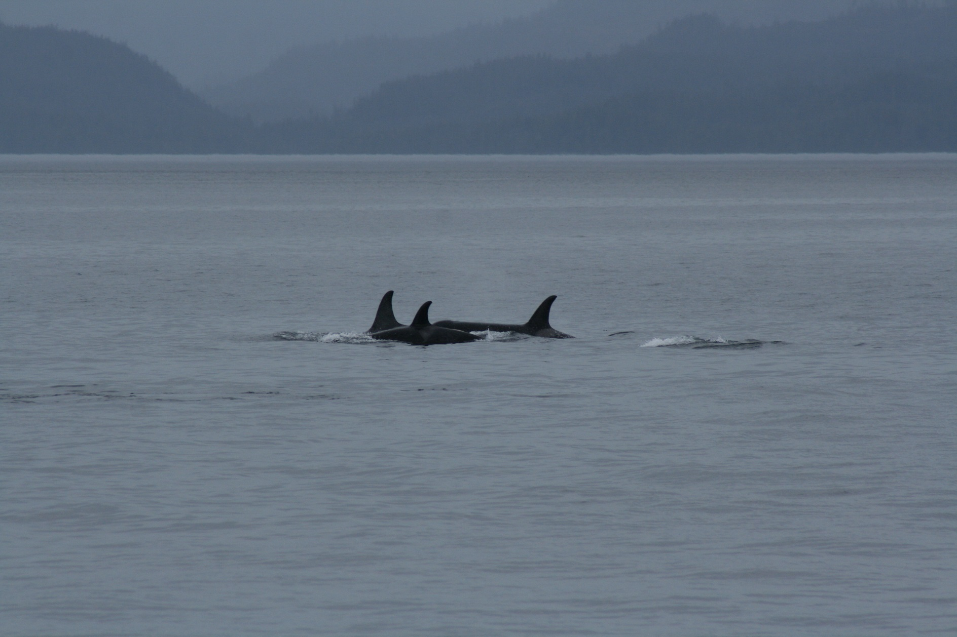 The A30s in Johnstone Strait – 9/10
