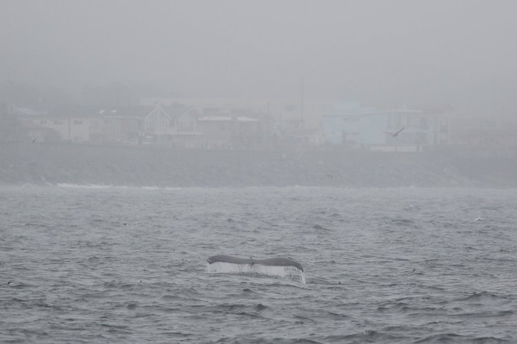 Humpbacks Close to Shore – 4/8/19