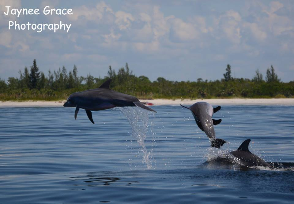 The Naming of Things: Bottlenose Dolphins and Bottlenose Whales
