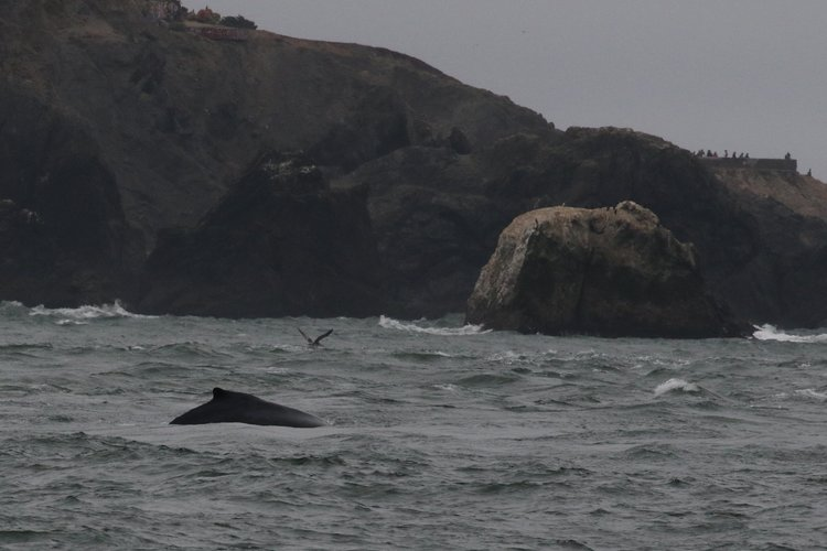 Spending the Day with a Humpback – 2/9/19