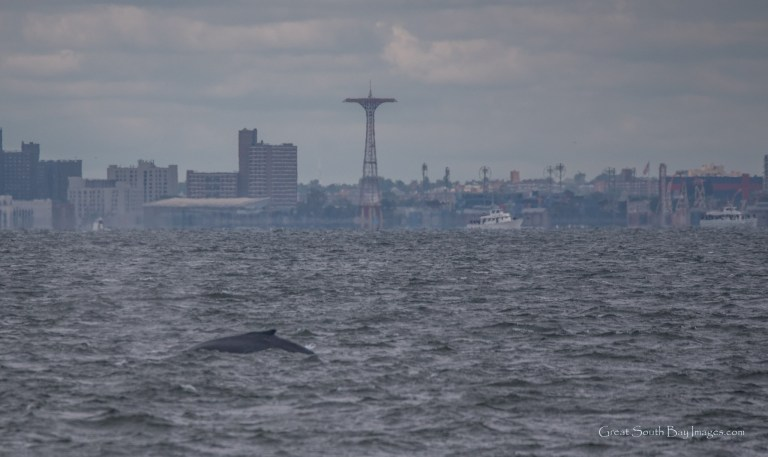 A Day with Gotham Whale off New York City – 30/9/17
