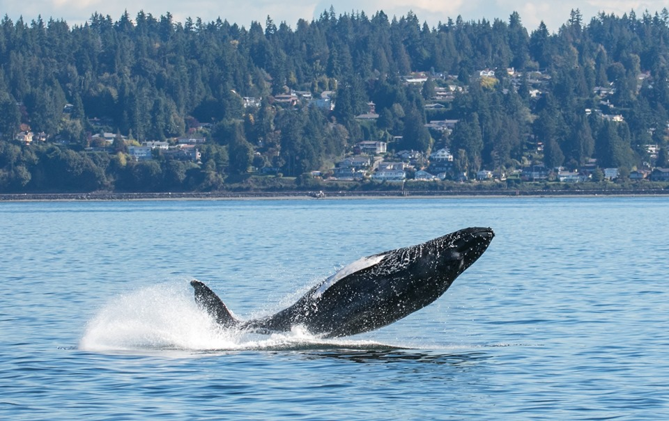 Beautiful Tour with a Humpback – 1/10/19