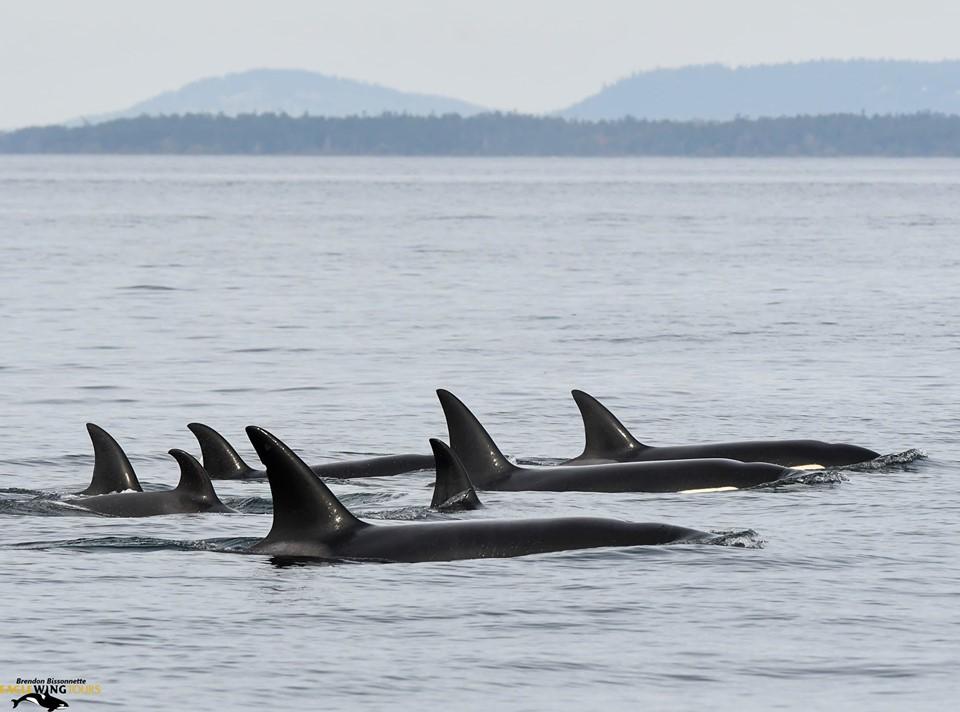 Incredible Day on the Salish Sea – 23/10/19