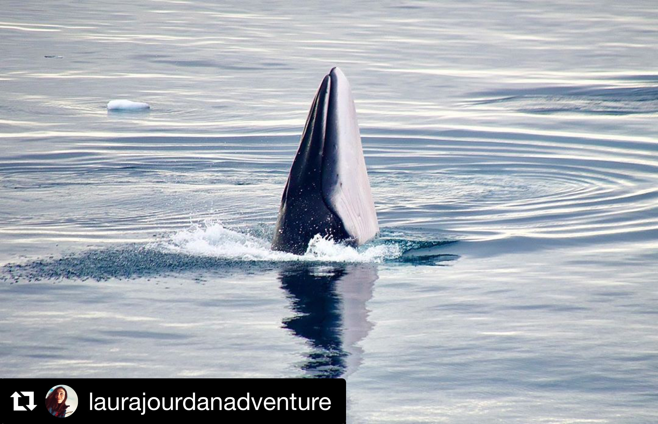 A Magical Experience with Minke Whales – 21/2/20