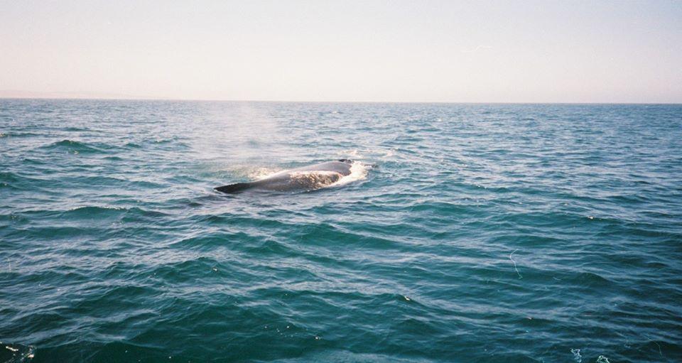 Incredible Encounter in Monterey! – 22/7/03