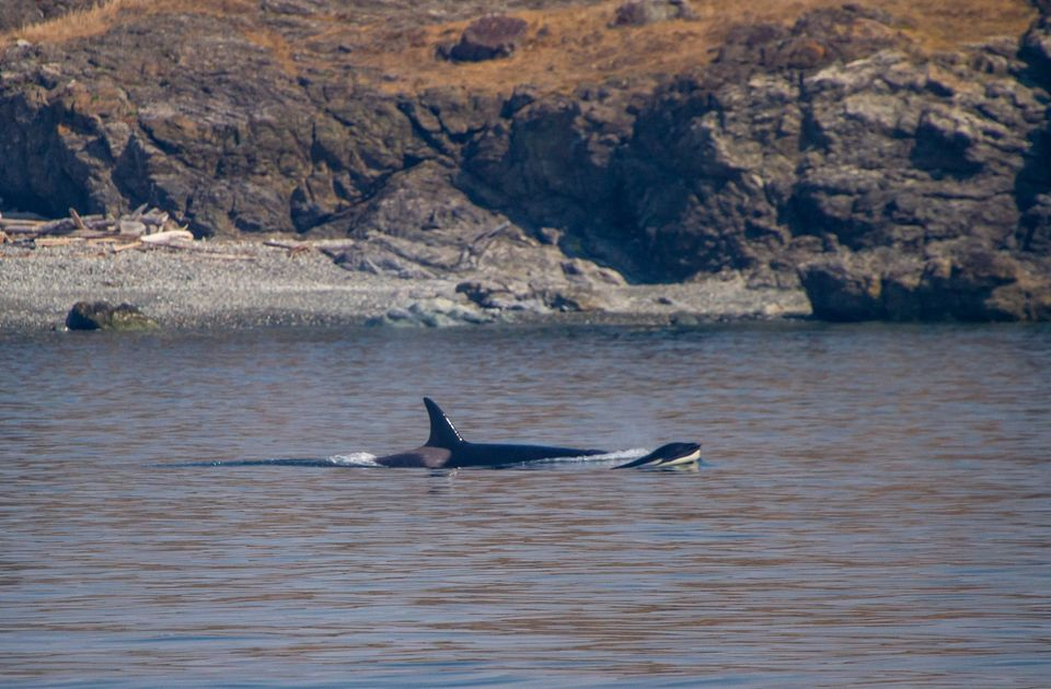 A Smokey Day with Biggs and a Minke Whale – 8/9/20